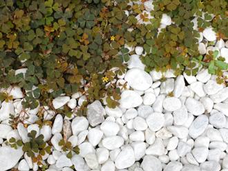 庭の玉砂利と植物
