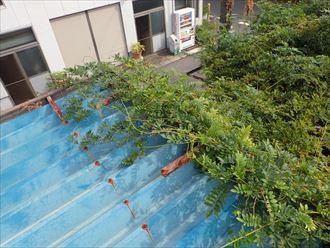 千葉市 折板屋根の塗装調査002_R