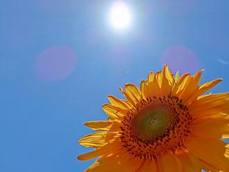 太陽と向日葵