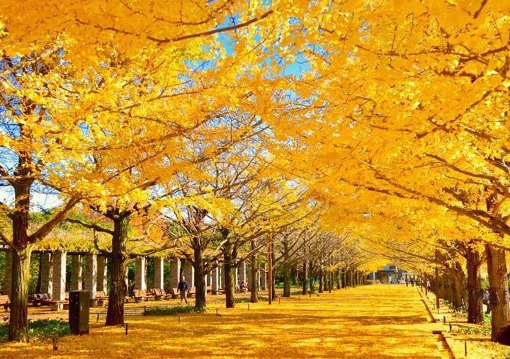 台風や晩秋の落葉に落ち葉除けネットはいかがですか