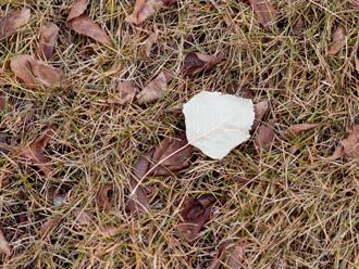 お庭に散らばった枯れ葉