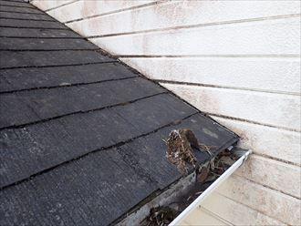 市川市妙典で行った化粧スレート屋根調査で下屋根に苔の発生