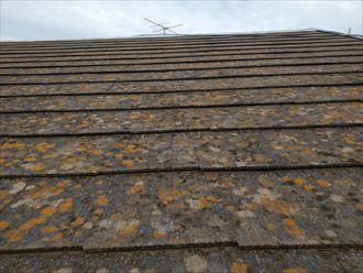 屋根塗装が剥がれて防水性が低下しているので苔・藻・カビが発生