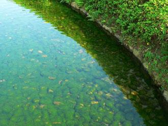 池の底の石に苔が生えてる