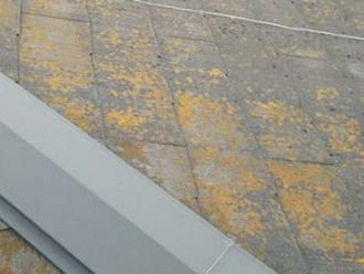 屋根一面に広がる苔