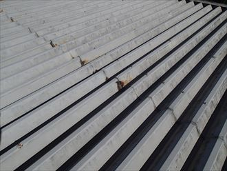 千葉市美浜区 折板屋根