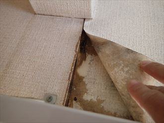 千葉市緑区 室内雨漏り状況