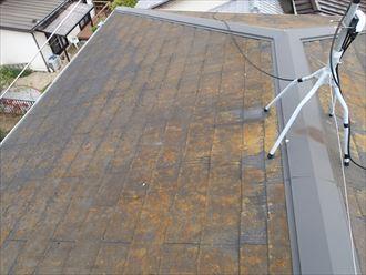 屋根に苔はあるが外傷はなし