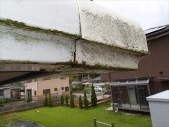君津市 雨水の流れ落ちるによる苔の発生