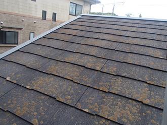 スレート屋根現地調査、苔カビ