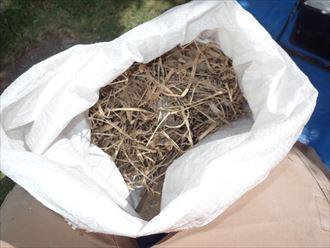 小屋裏鳥の巣