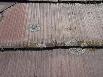 スレート屋根に苔やカビ繁殖
