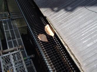 落ち葉除けネットが落ち葉を受けています