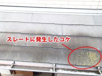野田市 スレートに発生したコケ