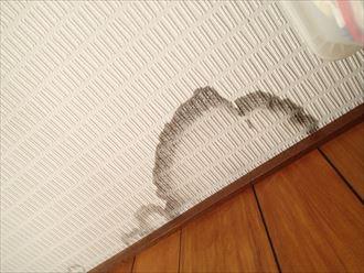 袖ケ浦市 室内雨漏り