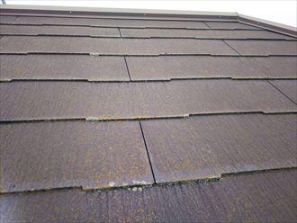 船橋市西習志野で行った化粧スレート屋根調査で苔・藻・カビが発生しています