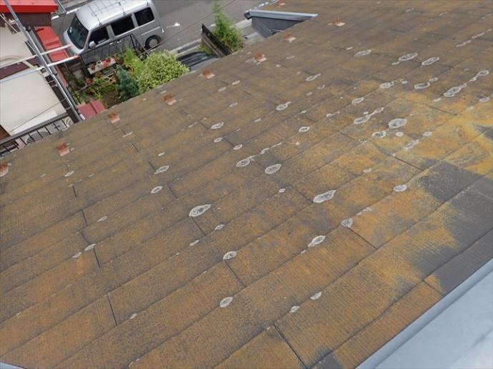柏市明原で行った化粧スレート屋根調査で防水性の低下により屋根全体に苔・藻・カビが発生