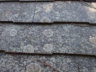 千葉市緑区土気町で行った屋根調査で防水性が低下した屋根に苔が発生しています