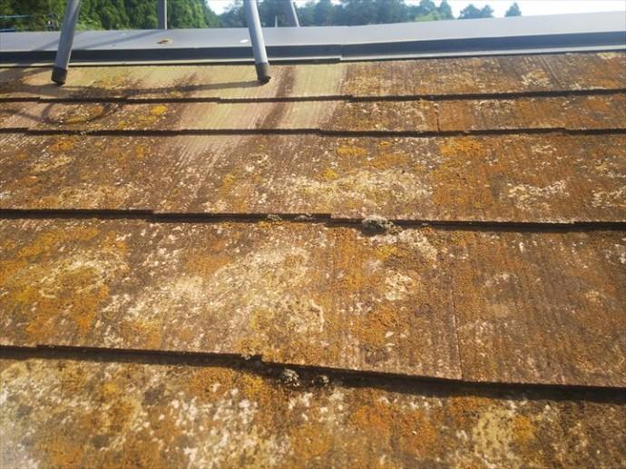 船橋市藤原で行った築30年が経過した化粧スレート屋根の調査で放置してしまうと雨漏りの原因になる苔を発見