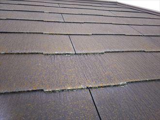 柏市加賀で行ったスレート屋根調査で苔の発生を発見