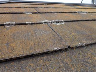柏市明原で行った化粧スレート屋根の調査で雨漏りの原因になる屋根材の隙間を埋めてしまう苔の発生
