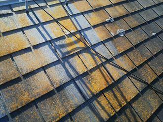 柏市南逆井で行ったスレート屋根の調査で北側に苔・藻・カビが発生しています