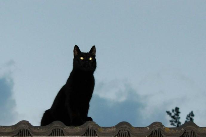 cat-339181_1280-columns1-columns1