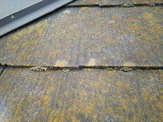 柏市永楽台で行った化粧スレート屋根調査でスレートとスレートの隙間を埋めてしまう苔は雨漏りに繋がります