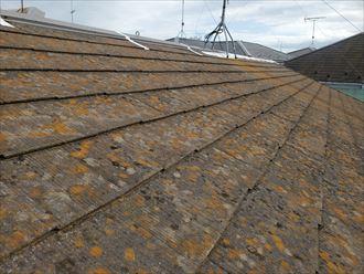 スレート屋根の塗装が劣化し苔・藻・カビが発生