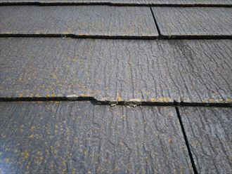 松戸市大橋で行ったコロニアル屋根調査で苔・藻・カビを発見