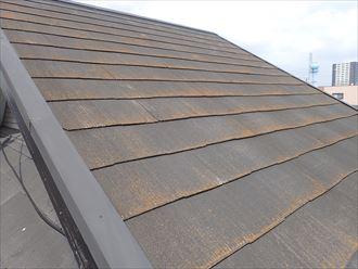 松戸市松飛台で行った化粧スレート屋根調査で苔・藻・カビが発生してオレンジ色に変色している化粧スレート