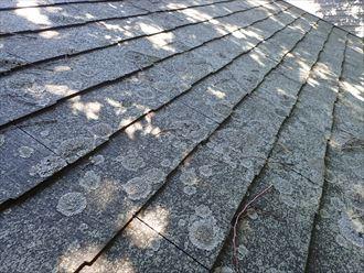 千葉市緑区土気町で行った屋根調査で屋根全体に苔の発生