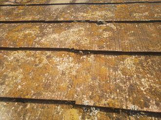 松戸市八ケ崎で行ったスレート屋根調査で屋根全体に苔・藻・カビが発生