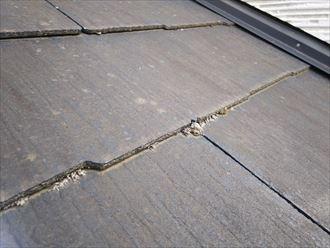 船橋市習志野台で行った屋根調査で下屋根に苔の発生