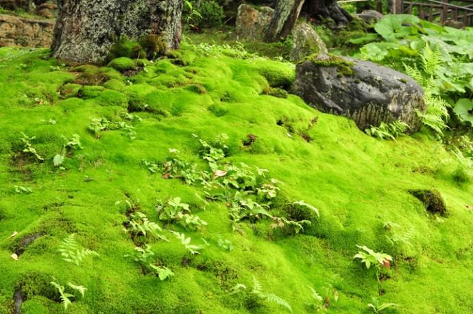 一面に広がる苔