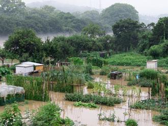 大雨による冠水