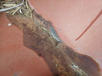 いすみ市 和瓦の雨漏り調査013_R