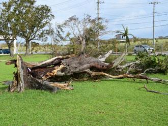 強風で折れてしまった木