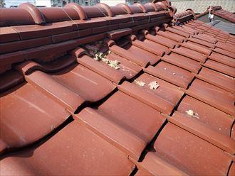 台風15号の強風の影響により葺き土が露出
